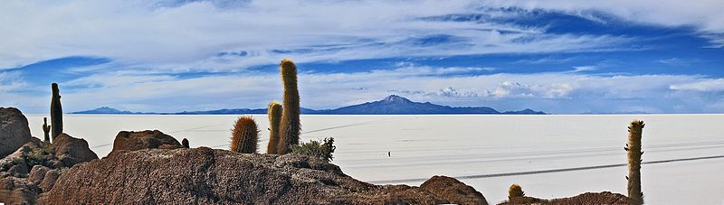 Isla del Pescado, Salar de Uyuni.jpg