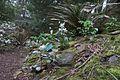J20160303-0194—Erythronium californicum—RPBG (25591116551).jpg
