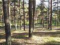 Jannseni parkmets 2.jpg