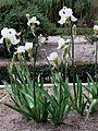 Jardín Botánico de Madrid en febrero- (16466572817).jpg