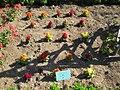 Jardin botanique Dijon 025.jpg
