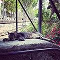 Category jardin des plantes de montpellier wikimedia commons - Jardin des plantes de montpellier ...