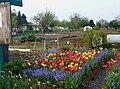 Jardins familiaux Tourcoing J1.JPG