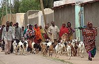 Jijiga people with goats.jpg