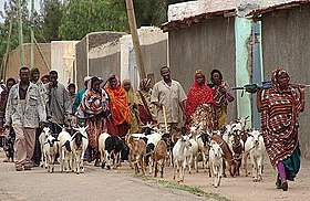Jijiga people with goats.jpg
