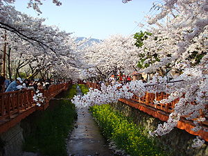 Jinhae-gu - Jinhae Gunhang Festival on April
