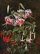 Johan Laurentz Jensen - Røde liljer og fuchsia.jpg