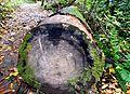 Joyce-kilmer-trunk-nc1.jpg