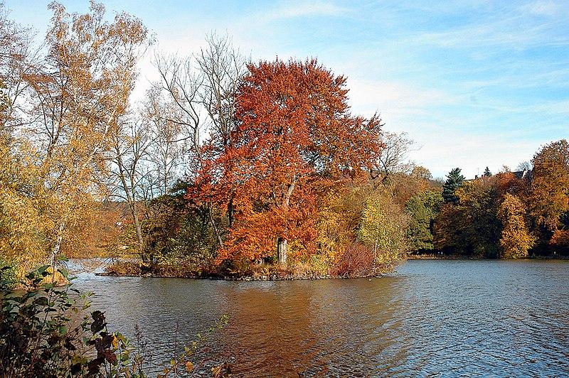 File:Juncus Pond Greiz.jpg