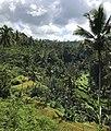 Jungle and rise fields, Bali, Indonesia.jpg