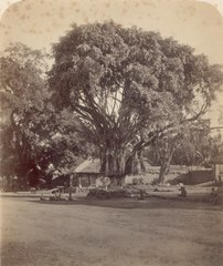 KITLV 106384 - Isidore van Kinsbergen - Audience on the square with the banyan tree outside the Puri (Kraton) of the prince of Boeleleng Singaradja - 1865.tif