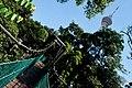 KL Forest Eco-Park Canopy Walk 3.jpg