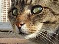 Kat - Katze - Cat - Chat - panoramio - Hänsel und Gretel (4).jpg