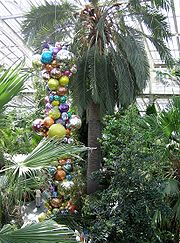 Chilean Wine Palm at Kew, the world's tallest indoor plant.