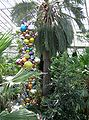 Kew.gardens.chilean.wine.palm.london.arp.jpg