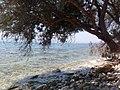 Kineta beach 2012.jpg