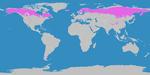 Klimagürtel-der-erde-boreale-zone.png