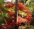 Klony w arboretum rogowskim.jpg