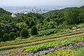 Kobe Nunobiki Herb Garden09bs3200.jpg