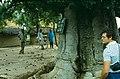 Kuka Mai Lumba - The Baoab with the Sign on It - Baobob Tree 1983.jpg