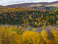 L'automne au Québec (8072460318).jpg