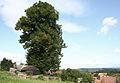 Lípa v Albrechticích s pohledem do krajiny.jpg