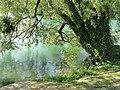 Lac du Parc de la Tête d'Or - DSC05260.jpg