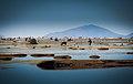 Lago Uru Uru Chipaya 1.jpg