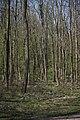 Lainzer Tiergarten März 2014 Buchenwald 1.jpg