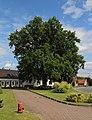 Lamsfeld Friedenseiche 08.JPG