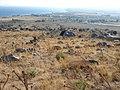 Land for Sale - panoramio.jpg