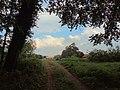 Landschaftsschutzgebiet Strothheide Melle Datei 13.jpg