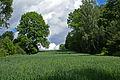 Landskap med kornåker (610426315).jpg