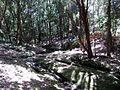Lane Cove Bushland Park creek.jpg