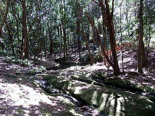 Lane Cove Bushland Park