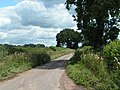Lane to Thorverton - geograph.org.uk - 1393403.jpg