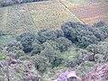 Las moras - panoramio (1).jpg
