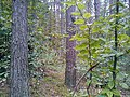 Las w Cielętach - panoramio.jpg