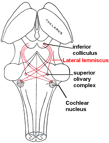 Lateral lemniscus