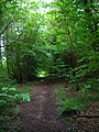 Laughton Common Wood - geograph.org.uk - 177492.jpg