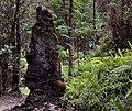 Lava tree 2.jpg