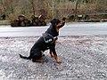 Lazy Dog - panoramio.jpg