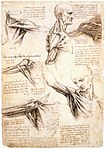 Leonardo da Vinci - Anatomical studies of the shoulder - WGA12824.jpg