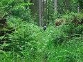 Letah Wood, Hexhamshire - geograph.org.uk - 127783.jpg