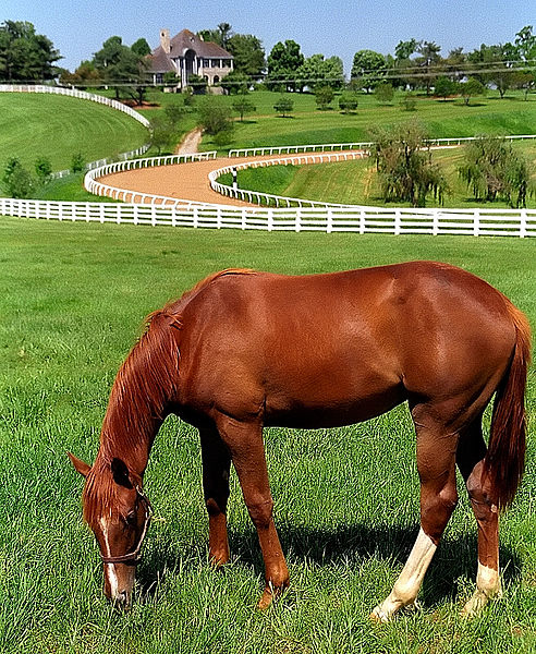"File:Lexington Kentucky - Donamire Farm ""The Good-Life for Horse"" (3571783564) (2).jpg"