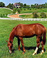 "Lexington Kentucky - Donamire Farm ""The Good-Life for Horse"" (3571783564) (2).jpg"