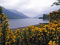 Loch Voil framed by gorse - geograph.org.uk - 425268.jpg