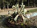 Lodhi Garden - Landscape 2.jpg