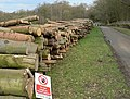 Logs stacked by Sandygate - geograph.org.uk - 366782.jpg