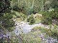 Lohgartengraben Wanderweg-BB2.jpg